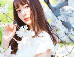 モデル アリーナ x 桜