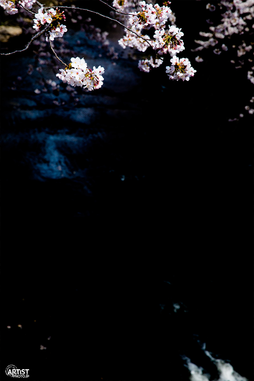 桜2017 テーマは「黒」